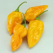 Devil's Tongue - Yellow Scoville Heat Units