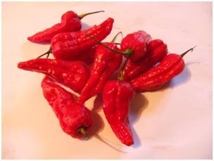 Gibralta / Spanish Naga Chili Pepper Scoville Heat Units