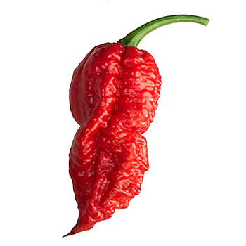 Bhut Jolokia Pepper / Ghost Chile Pepper Scoville Heat Units