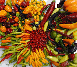 Hot Peppers Make Prostate Cancer Cells Die and Taste Buds Come to Life