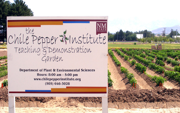 NMSU Researcher Wins Grant To Map Chile Genetics