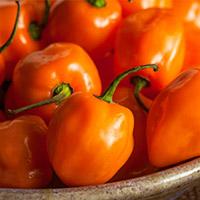 Habanero Chile Pepper - Orange Scoville Heat Units