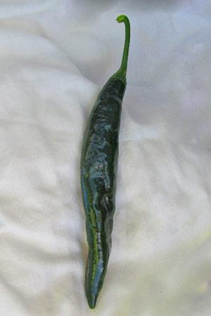 Pasilla Pepper Scoville Heat Units
