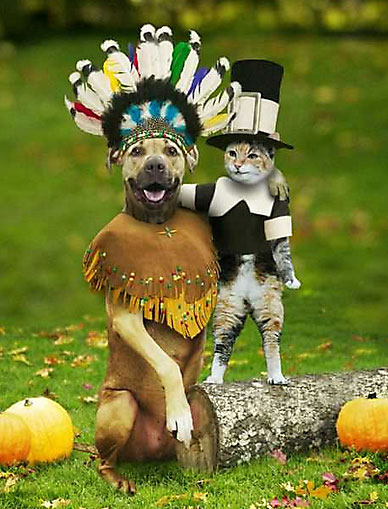 Happy Thanksgiving from the Indian Dog and Pilgrim Cat