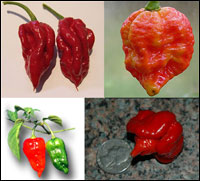 The Chile Pepper Race