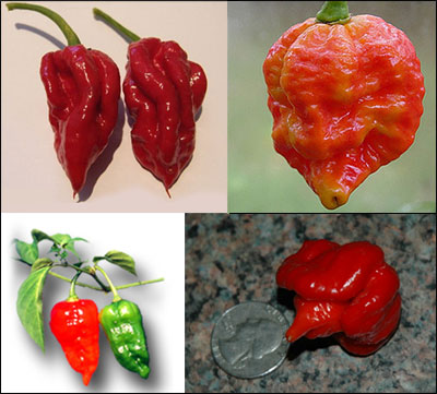 Contenders to the Throne: What is Really the World's Hottest Chile Pepper?