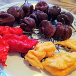 New Chile Peppers From Jim Duffy – Jay's Red Ghost Scorpion, Jay's Peach Ghost Scorpion and Chocolate Scotch Bonnet