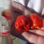 Smokin' Ed Currie with His World's Hottest Chile Pepper Carolina Reaper on CBS This Morning