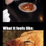 How I Eat Buffalo Wings – Hot Sauce Meme